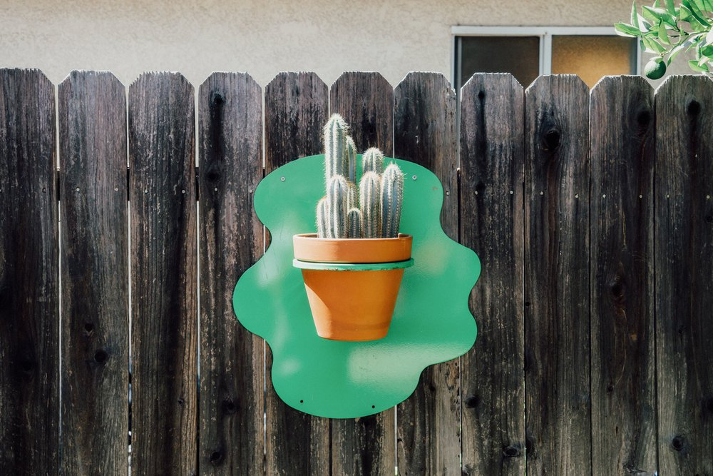 close-up view of cactus plant on fence